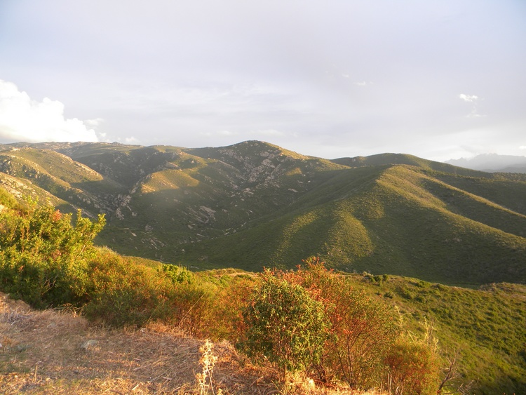 Paysage de garrigue dans le désert des Agriates en Corse