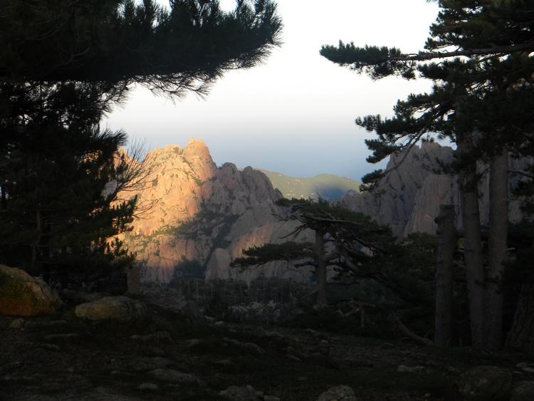 Vue à travers les pins des aiguilles de Bavella en Corse