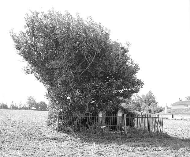 Cimetière protestant de la ferme de la Haute-Tallée à Chail. Photographie Alain Dagorn, 1991