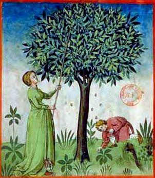 arbre_enlum_bnf_2.JPG